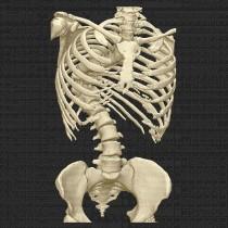 Spine 19