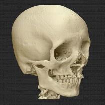 Skull 28