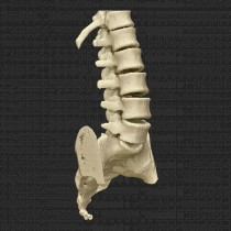 Spine 009