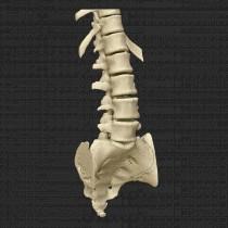 Spine 011
