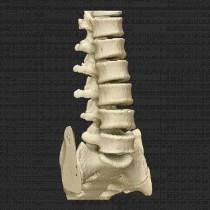 Spine 014