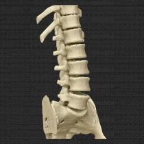Spine 016
